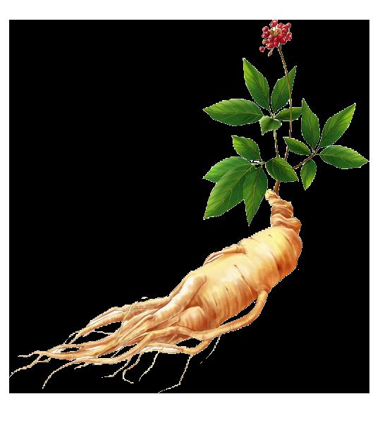 tinctura de ginseng îmbunătățește erecția)